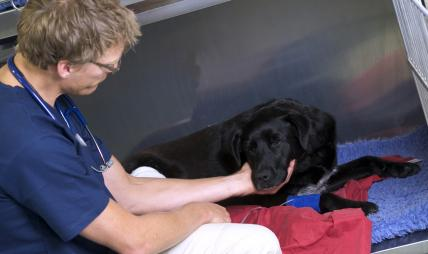 Veterinarian inspecting a dog